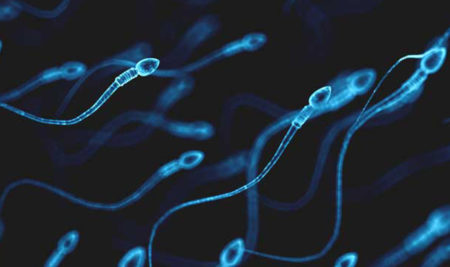 <thrive_headline click tho-post-7027 tho-test-3>Lifespan of a Sperm</thrive_headline>