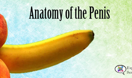 Basic Anatomy of the Penis