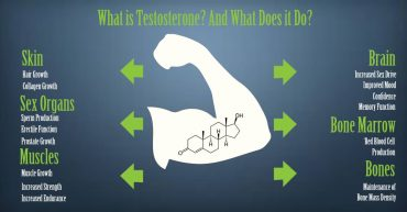 what is testosterone and what does it do