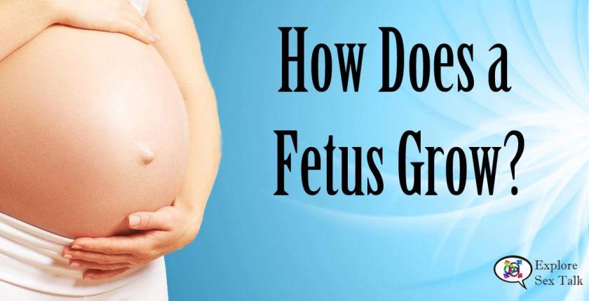 how does a fetus grow