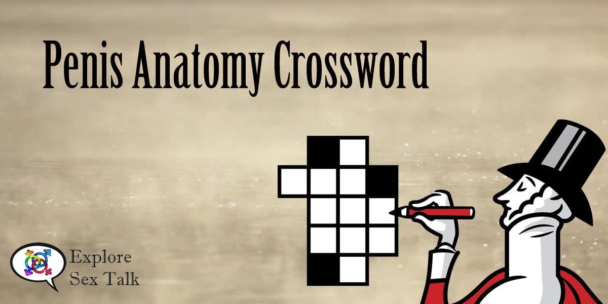 Penis anatomy crossword