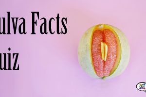 vulva-facts-quiz