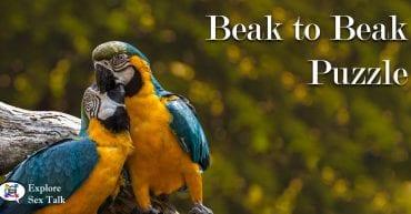 Parrots Love Puzzle